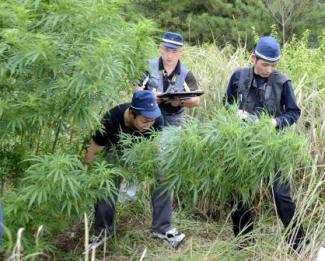 p14-mitchell-cannabis-b-20140420
